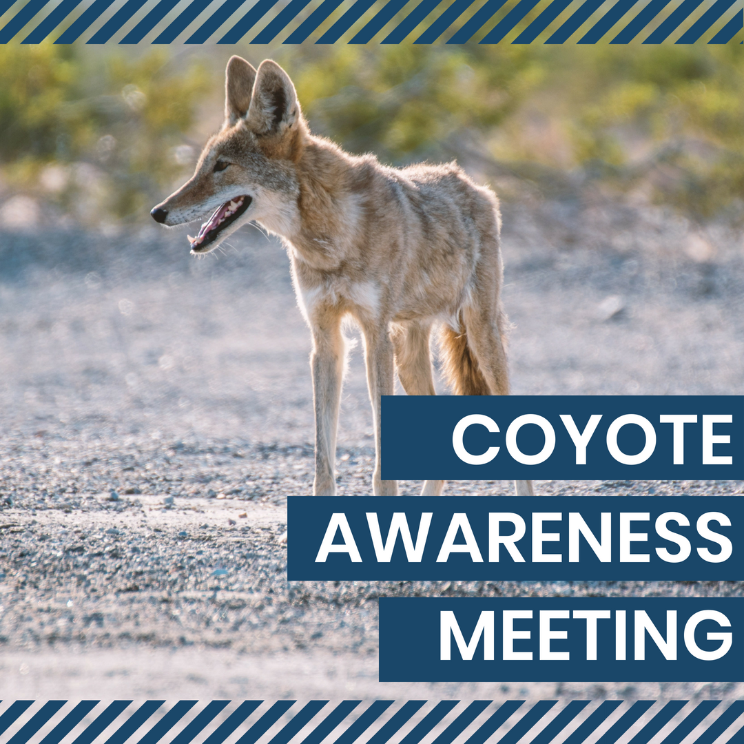 Coyote Awareness Meeting - coyote with text
