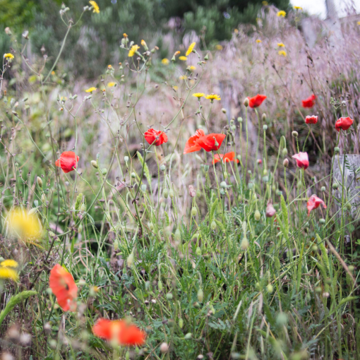 Meadow plants with flowers